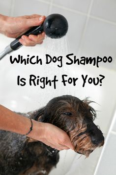 Which Dog Shampoo Is Right For Your Dog?: Wondering which dog shampoo is right for your dog? Check out our tips for choosing the best one for your pup's type of fur and skin needs. Dog Health Tips, Dog Health Care, Best Dog Shampoo, Pet Shampoo, Cute Dog Collars, Dog Shower, Dog Hacks, Dog Training Tips, Newfoundland