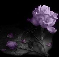Purple Flowers - karlaslayouts