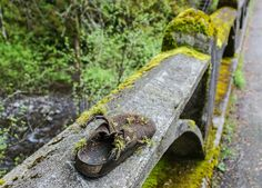 Found at Oneonta Gorge, Columbia River National Scenic Area, Oregon. Pat Snyder Photo.