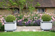 Bildresultat för fabulous duo rose and lavender