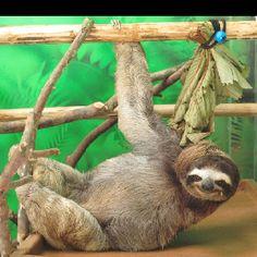 Costa Rica ~ loved the sloth farm