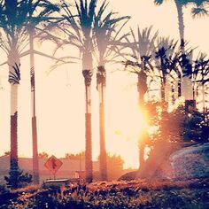 Palm Trees ❤ liked on Polyvore featuring backgrounds, pictures, photos, icons and images