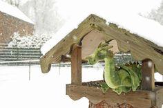 Drachen im Winter richtig füttern - so geht's