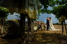 Recién casados entre viñedos en finca privada de Aspe, Alicante