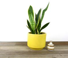 large Mid Century ceramic planter // canary yellow Gainey Ceramics La Verne planter