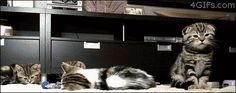 funny cat pictures with captions The cat that just casually hiccuped and probably summoned the dark lord.