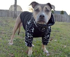 Pitbull sweater by Tooth & Honey