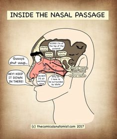 Nasal Passage - The Comical Anatomist