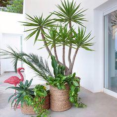 Flamingo rosa meiko metal rosa Am. Indoor Garden, Indoor Plants, Outdoor Gardens, Flamingo Rosa, Pink Flamingos, Green Plants, Green Flowers, Tropical Style Decor, Pots