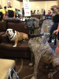 I met @BrutustheDane at #BlogPaws. See the pics on my Blog Paws #pinterest board