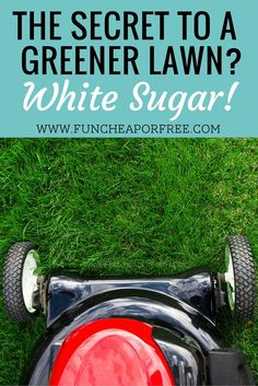 Lawn Care Tips for Cheap - Fun Cheap or Free How to use sugar on your lawn as an inexpensive fertilizer! (It's cheap and it WORKS!) How to use sugar on your lawn as an inexpensive fertilizer! (It's cheap and it WORKS! Grass Fertilizer, Garden Fertilizers, Organic Lawn Fertilizer, Lawn Care Tips, Yard Care, Lawn Maintenance, Landscape Maintenance, Poo Pourri, Green Lawn