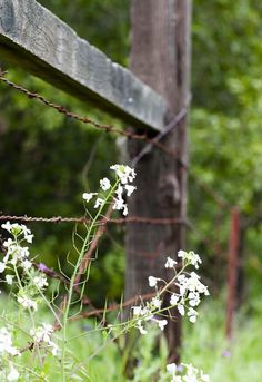Barbed wire fence and flowers Country Fences, Rustic Fence, Country Walk, Country Charm, Country Life, Country Girls, Country Living, Country Farmhouse, Modern Farmhouse