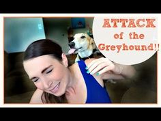 Attack Of The Greyhound | Meet Ralph | MamaKatTV