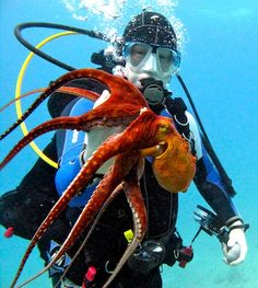 Scuba diving in Oahu, Hawaii. Diver holding an octopus