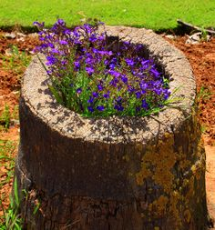 tree stump made into a flower planter; so neat.