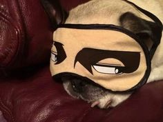 really . . . do pugs need this much help sleeping?! :-D