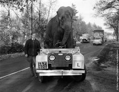 """""""Kam"""", an elephant from Bertram Mills circus """"drives"""" a Land Rover along a road during training for the Christmas Show. (Photo by Ron Case/Keystone/Getty Images). 27th November 1959"""