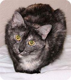 McDonough, GA - Domestic Shorthair. Meet Violet, a cat for adoption. http://www.adoptapet.com/pet/7891132-mcdonough-georgia-cat  Shelter: Henry County Humane Society E-mail: info@henryhumane.com Website: http://www.henryhumane.com Address: 46 Workcamp Road McDonough, GA 30253
