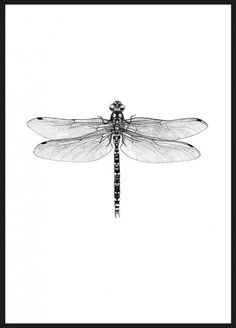 black and white Dragonfly Poster (50x70 cm)