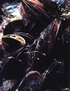 Colbert's Mussels...