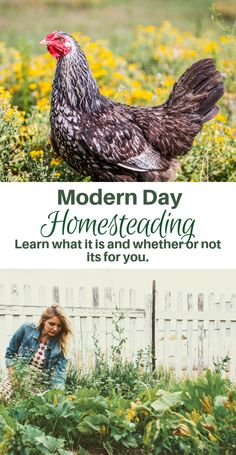 for Beginners - What is Homesteading? Click now to learn what homesteading is and whether or not its for your. Homesteading for beginners!Click now to learn what homesteading is and whether or not its for your. Homesteading for beginners! What Is Homestead, Homestead Layout, Homestead Farm, Homestead Gardens, Homestead Living, Potager Bio, Modern Homesteading, Organic Gardening Tips, Vegetable Gardening