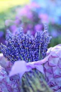 Lavender Oil Benefits and Uses for Hair & Skin - Health Beauty ABC Lavender Oil For Hair, Lavender Flowers, Purple Flowers, Lilac Color, Dry Flowers, Lavender Tea, Lavender Cottage, Lavender Fields, Natural Oils