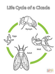 Life Cycle of a Cicada coloring page from Cicada category. Select from 24848 printable crafts of cartoons, nature, animals, Bible and many more. Insect Activities, Science Activities For Kids, Sequencing Activities, Penguin Coloring Pages, Coloring Pages For Kids, Elementary Bulletin Boards, Elementary Art, Butterfly Coloring Page, Online Coloring