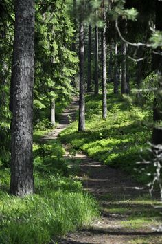 finnish forests - Google Search