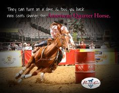 The American Quarter Horse.