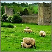 Kilkenny Ireland - Bing Images