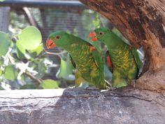 Colourful parrots at Healesville Sanctuary