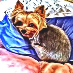 Cartoon Yorkie