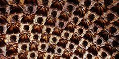 Aspecto parcial del artesonado del crucero de la iglesia del convento de la Merced, en Granada. #artesonado #madera #mudejar #laceria #wooden #ceiling #woodenceilingdesign #woodenceiling #carpentry #carvedwood #artwork #woodwork #woodworking #tracery