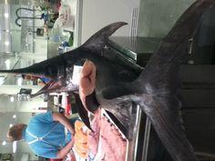 Fresh fish from Almeria #spanish #food  #travel #spain #foodstagram @ Mercado Central de Almería
