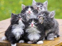 Videos de gatos chistosos y tiernos