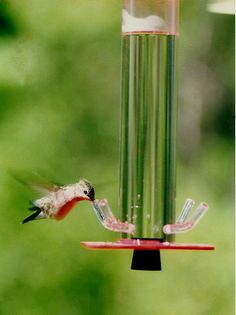 images about bird drink feeder on Pinterest
