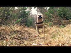 TRET parkur masters - YouTube