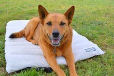Travel Dog Bed We are always on the go, weather we go on road trips, or camping trips a travel dog bed is a must and when IMK9 approached us asking if we would be interested in reviewing theirtravel dog bed we were more then happy to work with them on reviewing, and testingthe bed.Like …