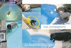 Les Bestiaire Desjoyaux : nos compagnons.