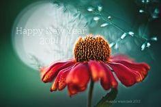 Happy New Year 2014 !!!