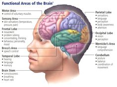 Brain Diagram And Functions Of Parts 49 Luxury Parts Of The Brain And Their Functions Chart. Brain Diagram And Functions Of Parts What Functions Are On The Left Side Of Brain Best Brain Brain Diagram And Functions Of Parts… Continue Reading →