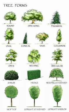 #LandscapeArquitecture