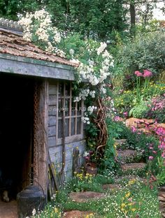 Rustic old garden shed maintains it's beauty as flowers grow all around it...