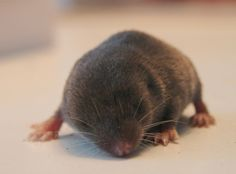 Baby mole. Awe this makes me think of Service For Sight haha