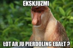 pl - Kiedy on naprawdę napisał pierwszy Very Funny Memes, Wtf Funny, Polish Memes, Funny Mems, Silly Jokes, More Than Words, Creepypasta, Best Memes, Laugh Out Loud