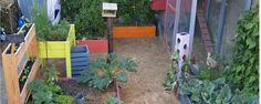 jardiner en ville : facile ou pas facile ?