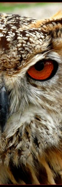 Up close and personal! #owl #eye