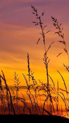 Sunset Sky Flickr