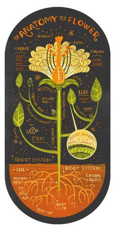 Anatomia di una stampa d'arte fiore di Rachelignotofsky su Etsy