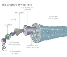 Learn About Wool - wool fibre structure